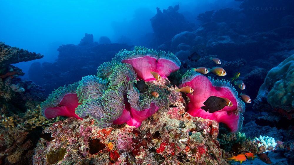 Подводный мир холодных морей