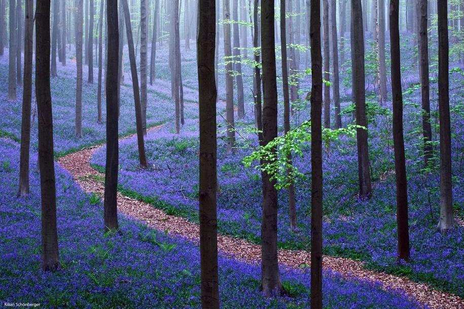 Чарующие снимки лесов и природы от фотографа с дальтонизмом