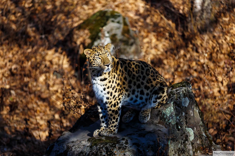 Осенние краски Приморского сафари-парка