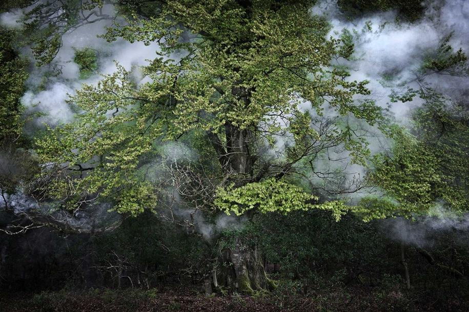 Лес — это места очарования и волшебства
