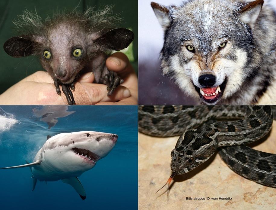 Самые страшные и опасные животные по версии WWF