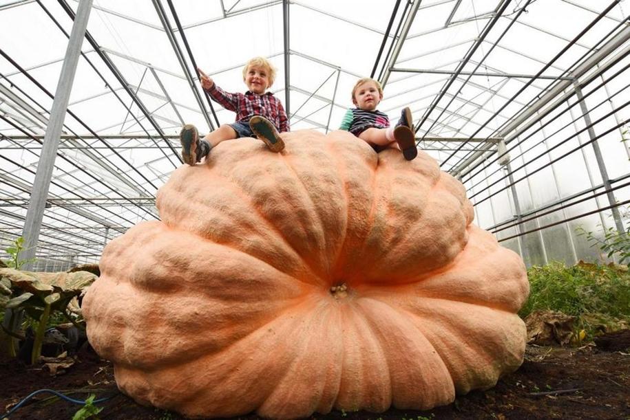 Братья-близнецы установили новый рекорд Великобритании, вырастив тыкву весом 1030 кг