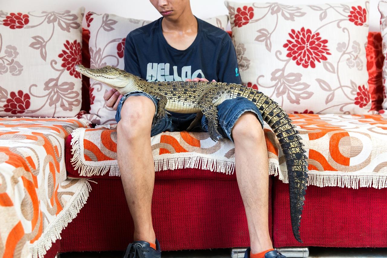 Необычные домашние животные в Китае