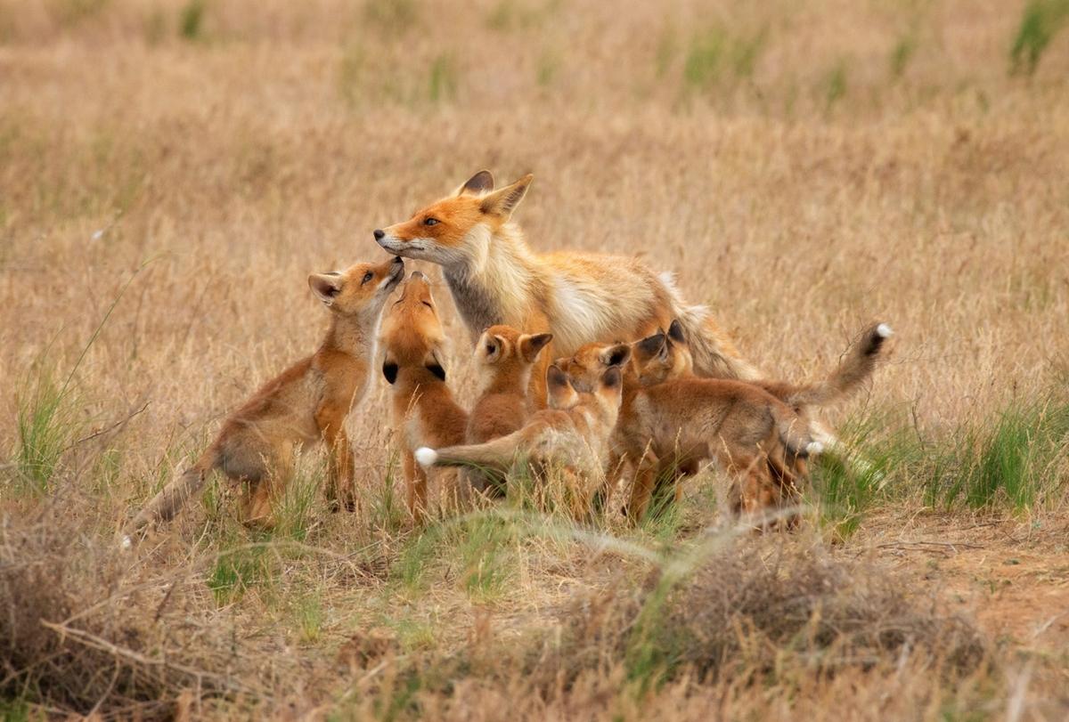 Биосферный заповедник «Чёрные земли»: мир дикой природы Калмыкии