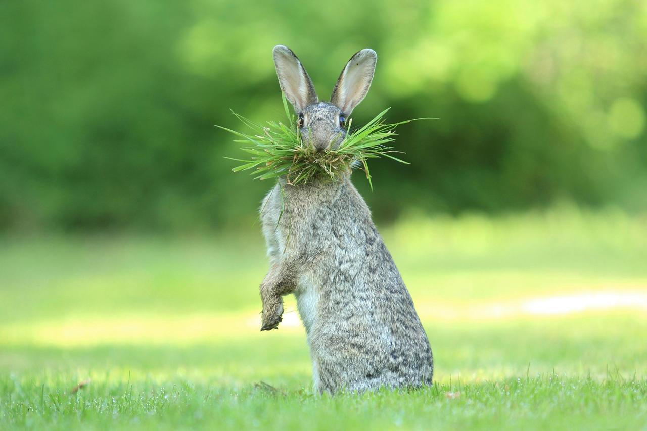 Веселый фотоконкурс Comedy Wildlife Photography Awards 2017