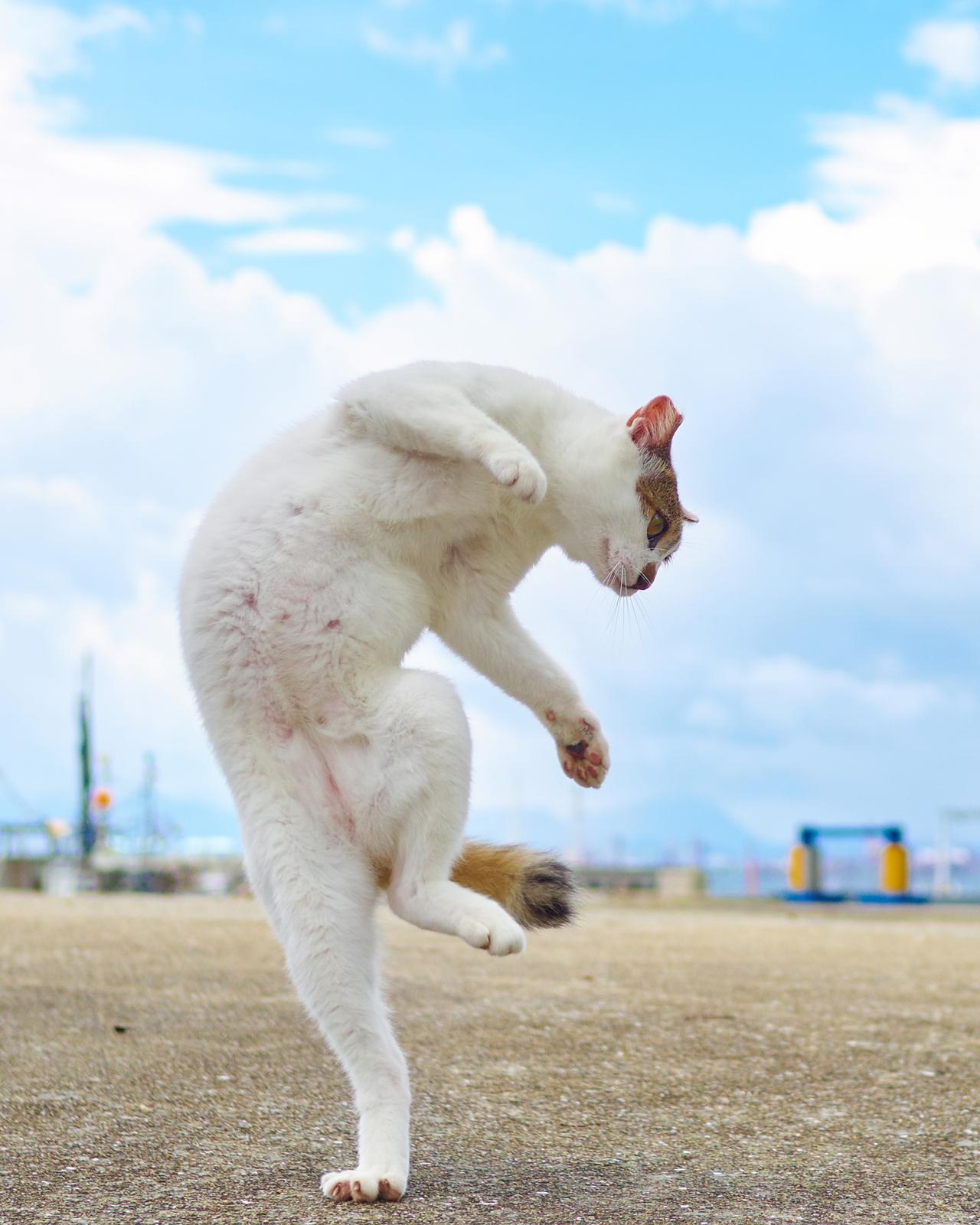 Кунг-фу кошки: красота и грация
