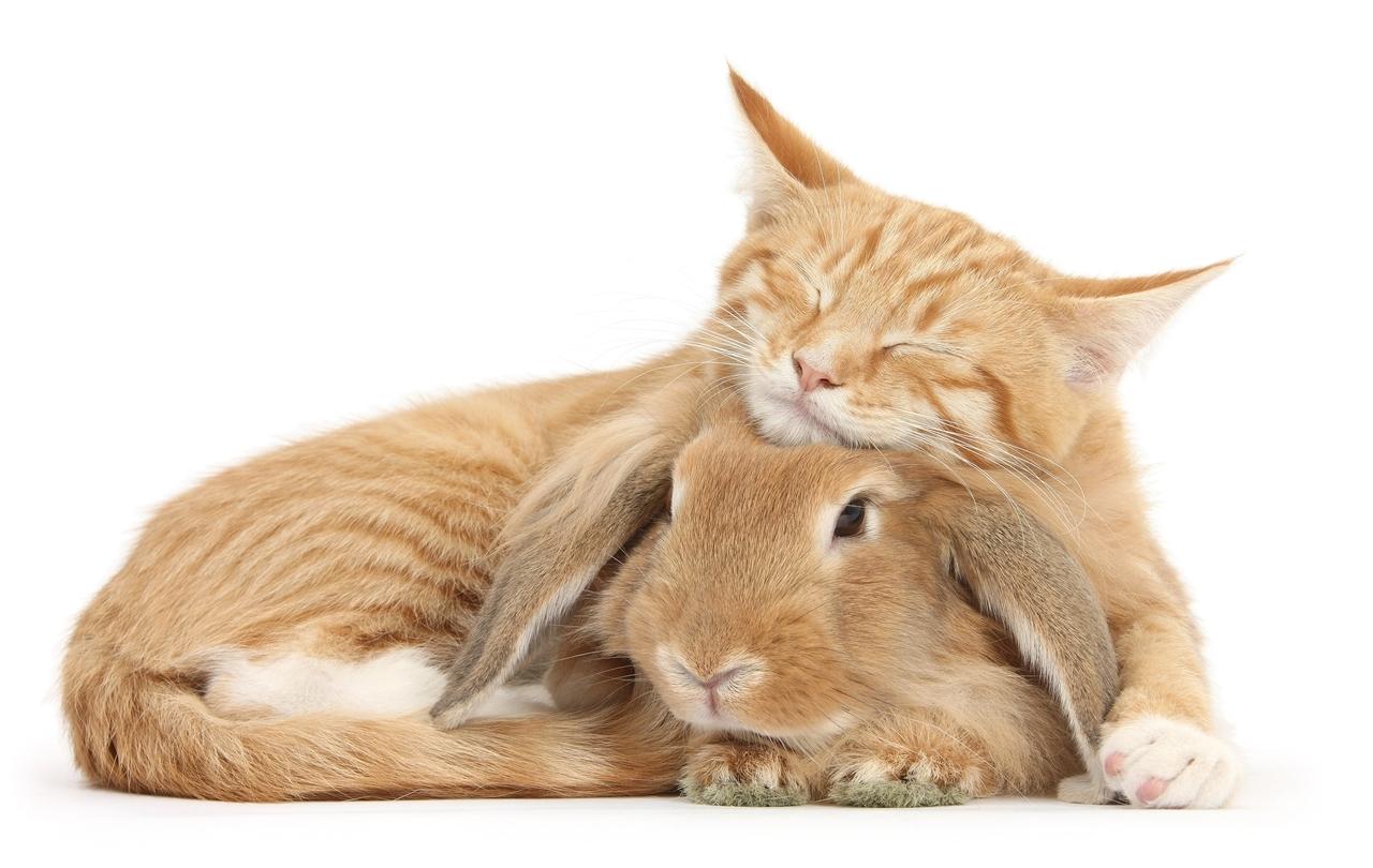 Похожие кролики и кошки