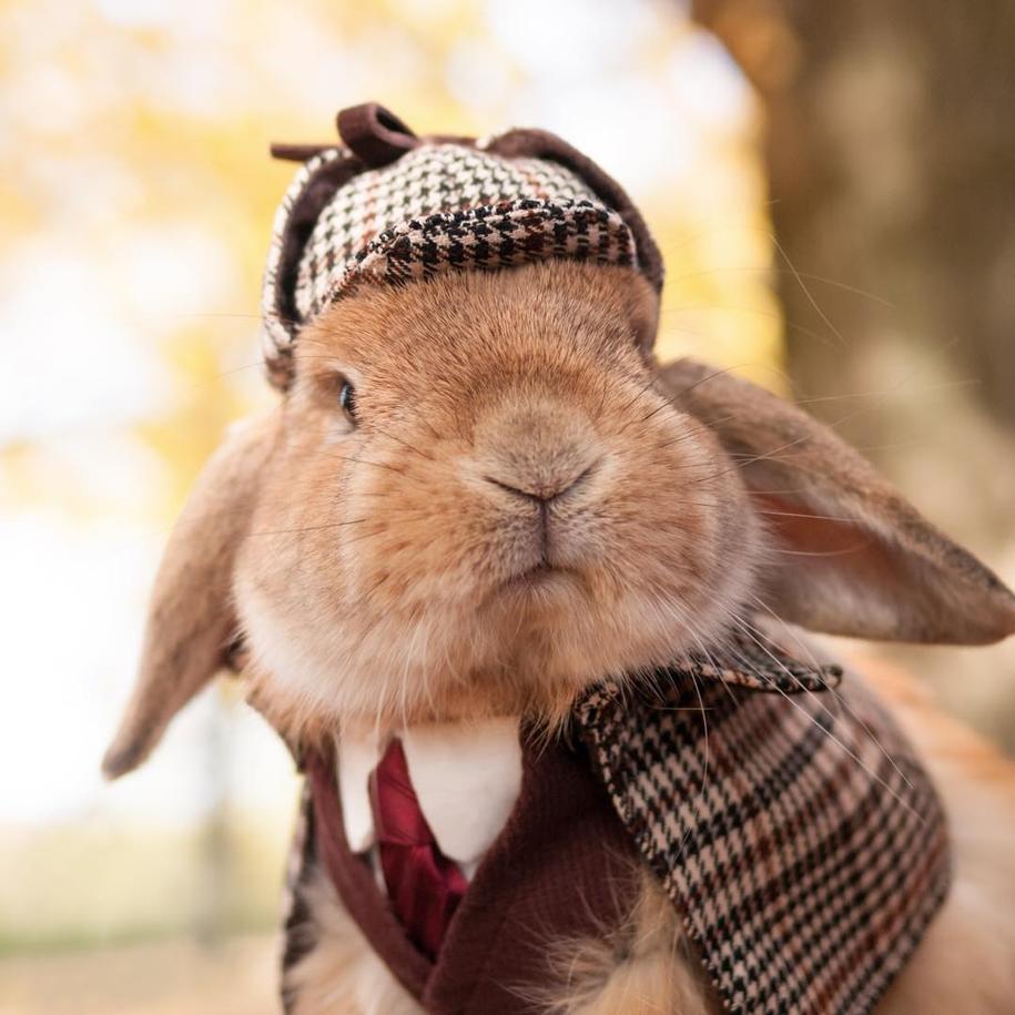 Пуи Пуи — самый стильный кролик в мире