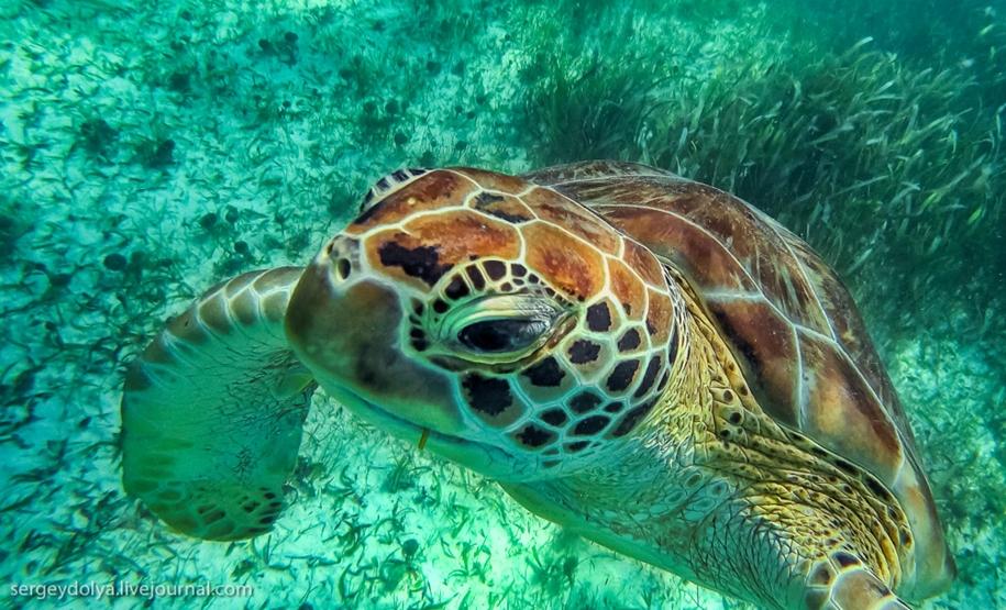 Снорклинг с гигантскими черепахами в Мексике