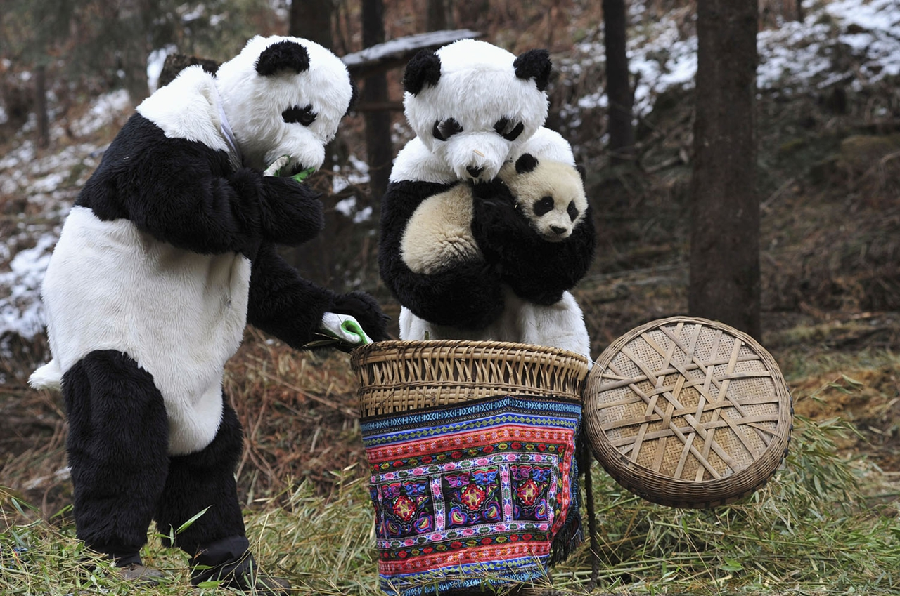 Уникальные резерваты большой панды