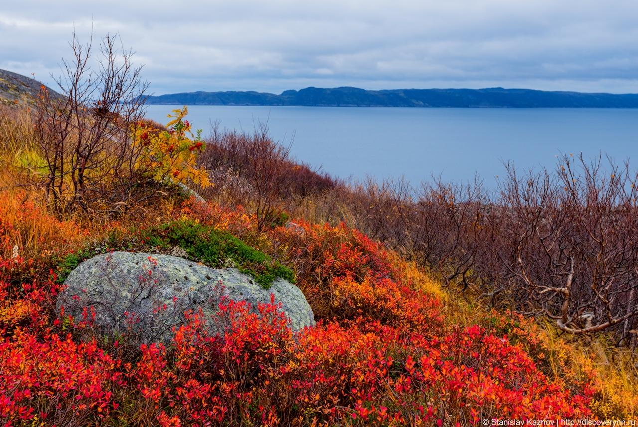 Осенние краски тундры