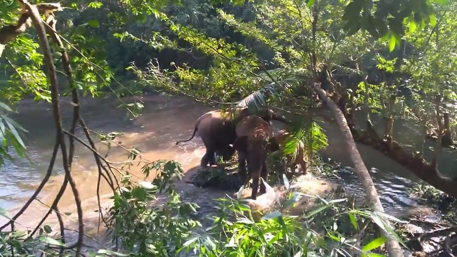 Семья слонов благодарно помахала хоботами за спасение их детёныша