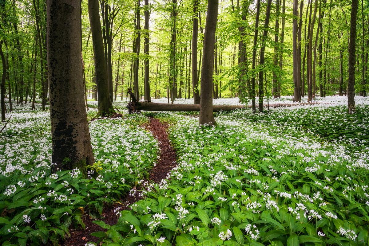 Магия леса в фотографиях Хейко Герлихера