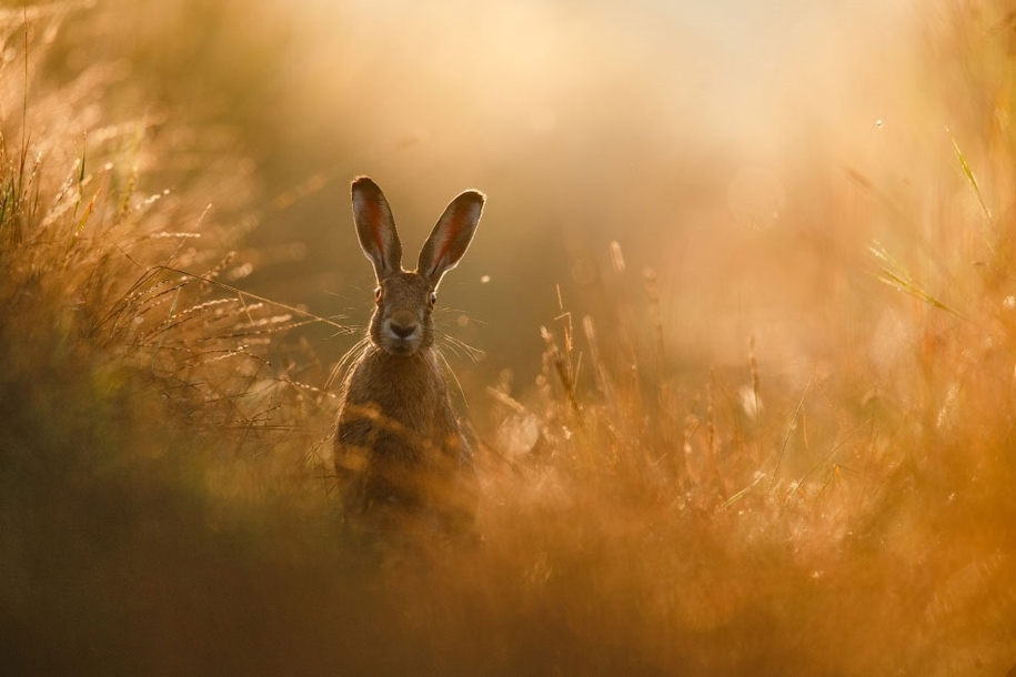 Победители конкурса Nature Photographer of the Year 2020