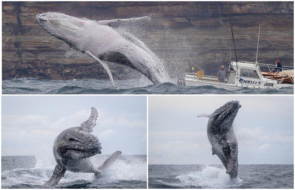 Горбатые киты с удовольствием позировали туристам