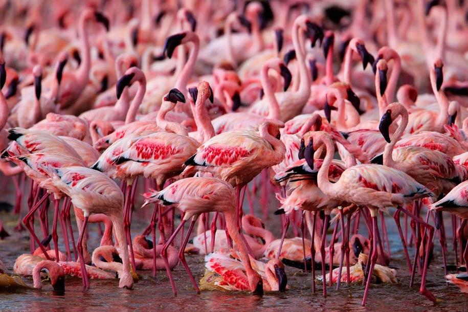 Страна розовых фламинго