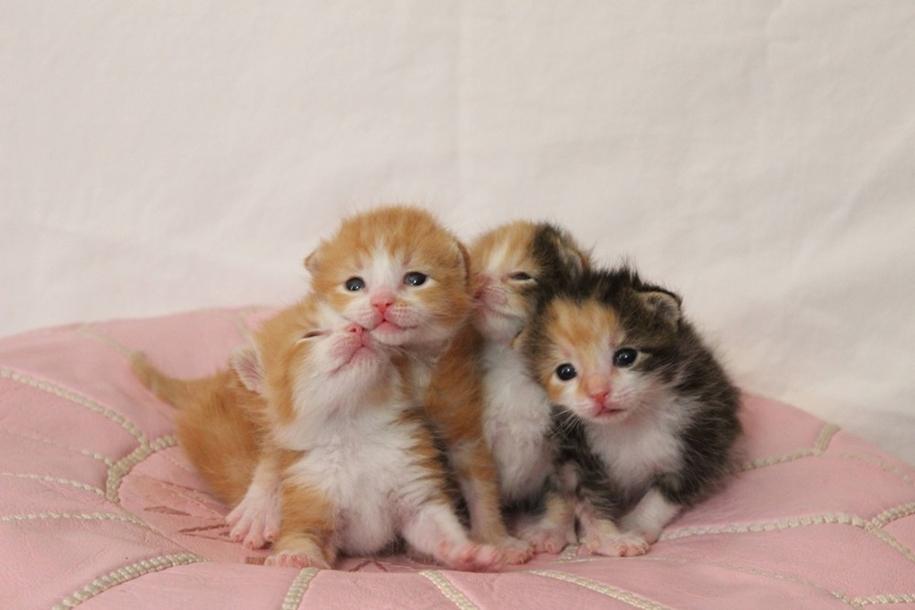 FotoRelax котики