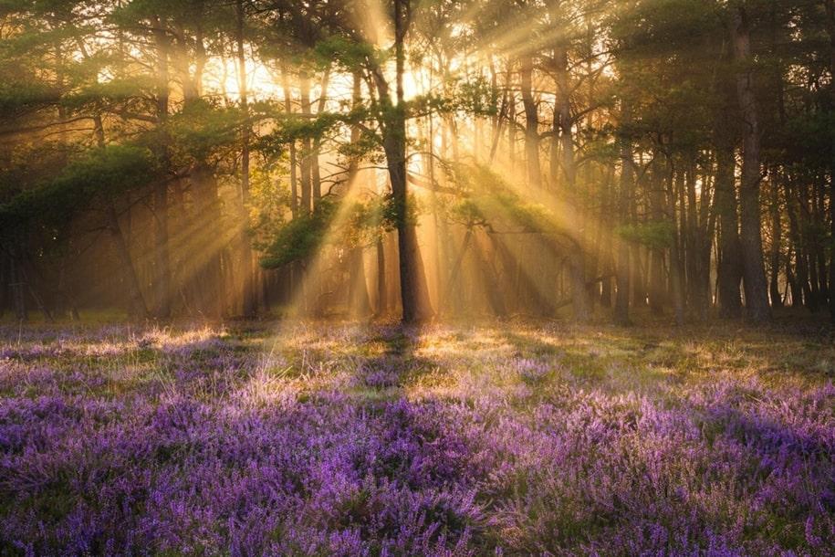 Восхитительные пейзажи нашей природы