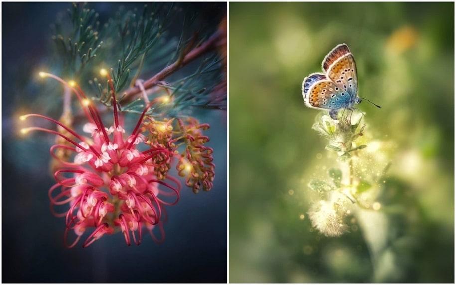 Красивые макрофотографии от Ани Стребер