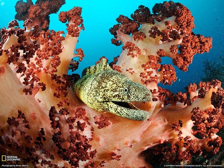 Таинственный подводный мир