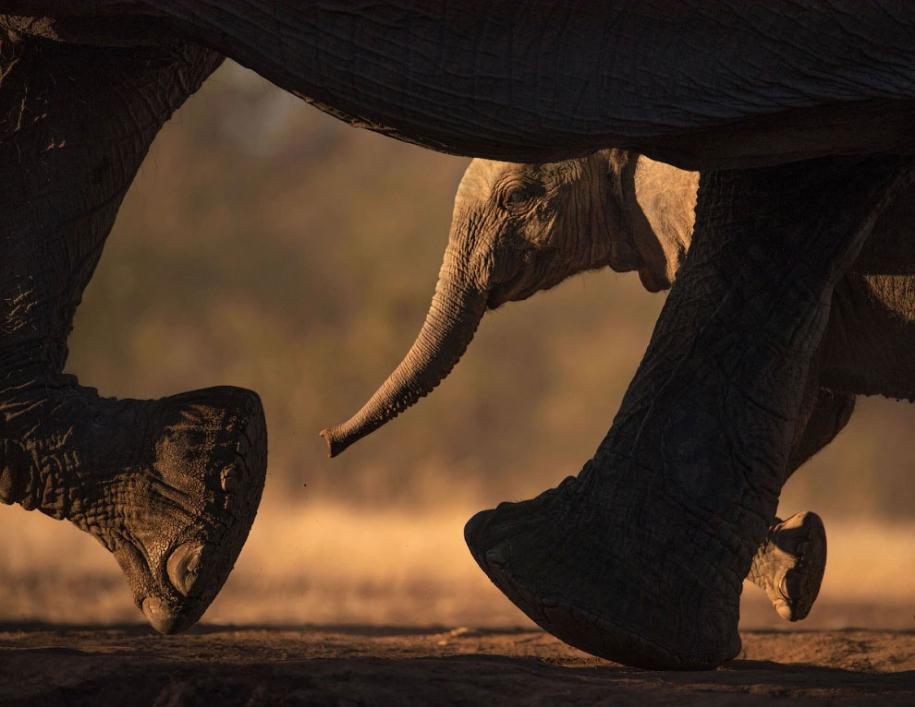 Всемирный день слонов 2020