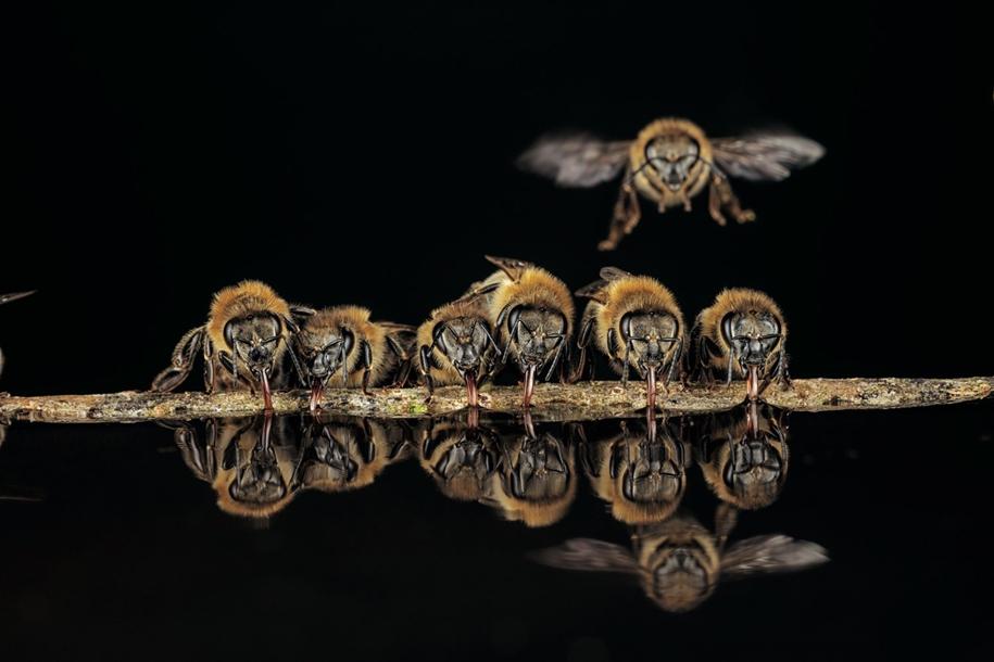 Тайны диких пчел: уникальные фотографии