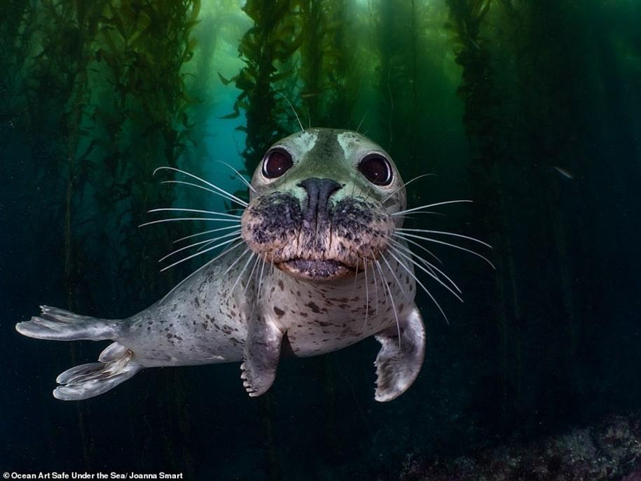 Победители конкурса подводной фотографии Ocean Art 2020