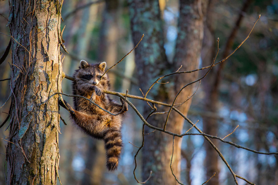 Финалисты конкурса Comedy Wildlife Photography Awards 2020