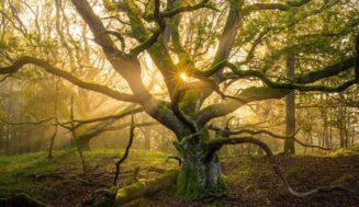 Красивая природа мира