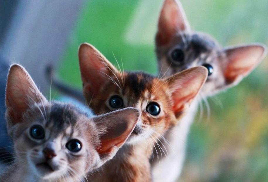 Забавные и милые котейки