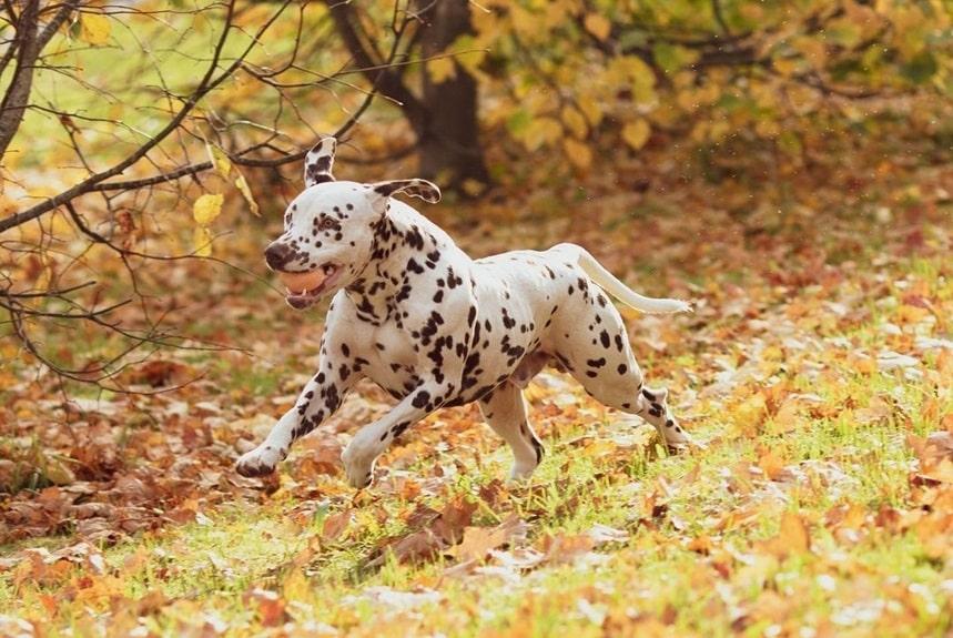 Забавные и милые собачки