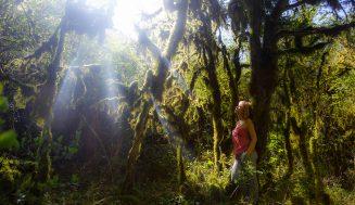 Абхазия. Сказочный лес