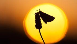 Силуэты животных на фоне красивого восхода и захода солнца