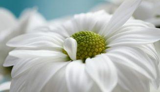 Красивые фотографии с цветами и природой