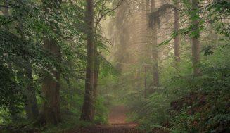 Леса – это украшение земли