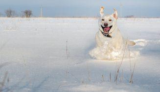 Забавные и симпатичные животные зимой