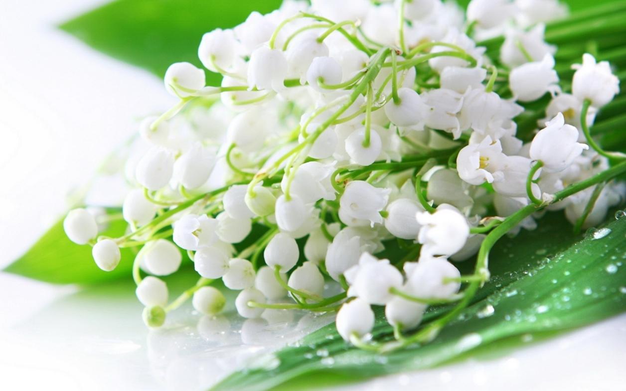Ландыш майский — нежный цветок с ядовитыми ягодами ☝