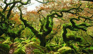 Мифические леса мира