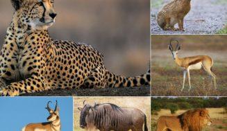 Топ-10: самые быстрые животные
