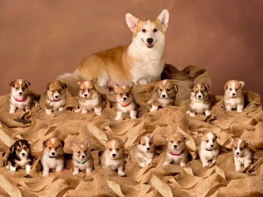 Фото с собачками