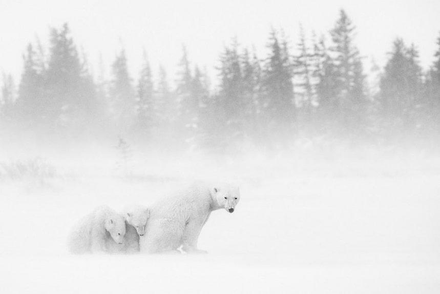 Поразительные черно-белые фото животных Марко Ронкони